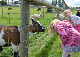 About The Farm - Hatfield Park Farm