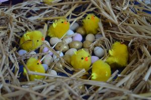 Easter on the farm