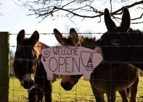 The Farm opens for a new season on March 7th - Hatfield Park Farm