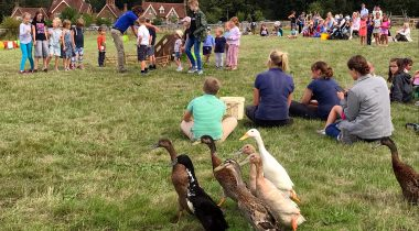 Dog and Duck Show - Hatfield Park Farm