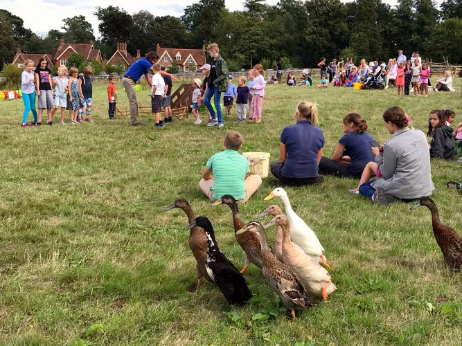 Dog and Duck Show - Hatfield Park Farm