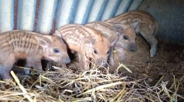 Welcome to our latest addition to the Farm Family - Hatfield Park Farm